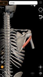 小円筋(肩腱板筋群の一つ) 引用:解剖学-3Dアトラス